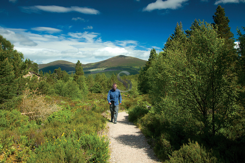 A walker on the Allt Mor path, Glenmore National Nature Reserve, Cairngorm National Park, Badenoch & Speyside