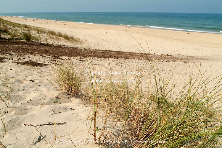 Sand dunes above the swimming beach at Le Porge, Gironde, France.