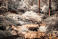 Infrared photos from Garvan Woodland Gardens.  Garvan Woodland Gardens is the botanical garden of the University of Arkansas located in Hop Springs Arkansas and the Ouachita Mountains.