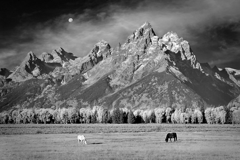 Horses grazing in pasture with Teton Mountains. Grand Teton National Park, WY with added moon.