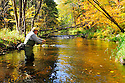 00416-030.19 Fishing:  Angler is fly fishing on stream.  Fall color, brook trout, brown trout, flies, wade.