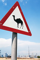 United Arab Emirates, Dubai: Camel crossing road sign and Dubai city skyline