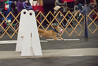 2016 Santa Paws Flyball Tournament held Dec 10 and Dec 11 at Finger Lakes Pet Resort Farmington NY