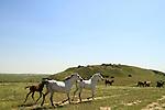Tel esh-Sharia, site of Biblical Ziklag