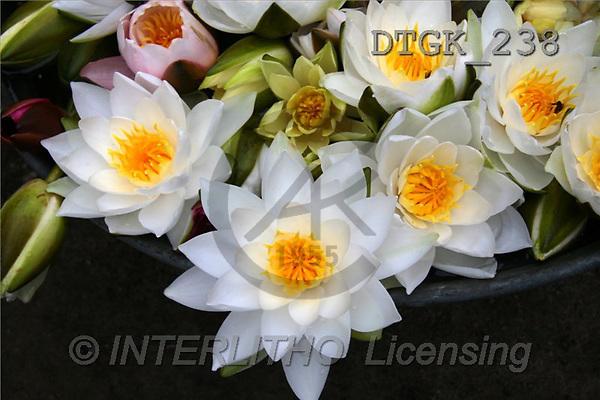 Gisela, FLOWERS, photos(DTGK238,#F#) Blumen, flores, retrato