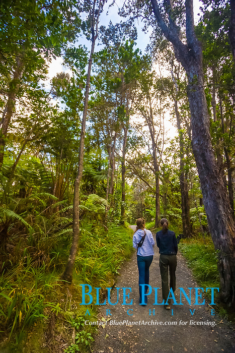 woman tourists, hiking rainforest trail, Hawaii Volcanoes National Park, Kilauea, Big Island, Hawaii, USA