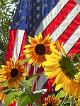 Sunflowers and American flag