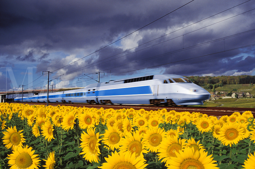 High speed train travelling through fields of sunflowers and vineyards.  France.
