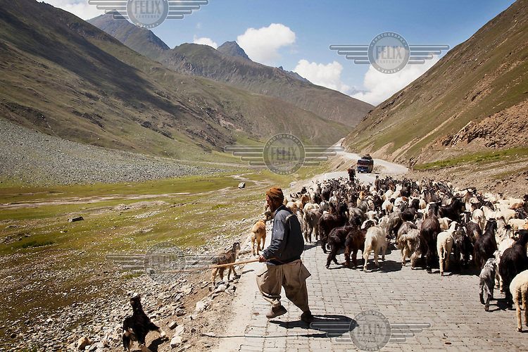 A goat herder moves his flock down a highway. Mountains in the background.