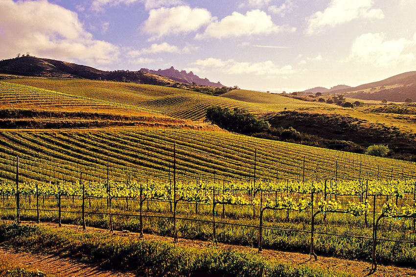 Chalone Vineyards near the Pinnacles, Monterey County, California USA