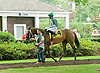 Daring Reality before The Delaware Handicap (gr 2) at Delaware Park on 7/21/12