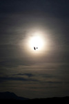 A glider flies past the sun at Cap Bear, near Port Vendres, France.