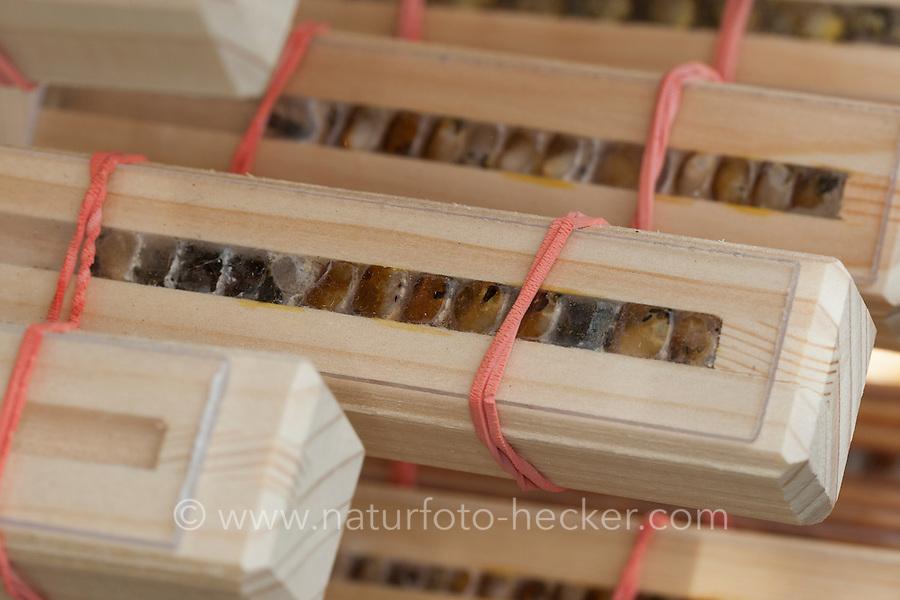 Insekten-Hotel, Insektenhotel, Nisthilfe für Wildbienen mit Beobachtungsmöglichkeit, sichtbare Brutzelle, Brutzellen, bietet Nistmöglichkeiten für Wildbienen, Mauerbienen und solitäre Wespen