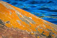 Vägglav på klippa i Stockholms skärgård.