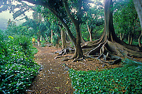 Couple walking along the path of the tropical botanical gardens of Kauai