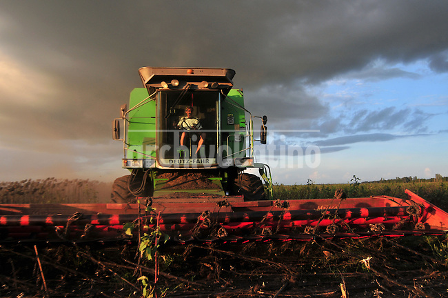 Sunflower harvest  in a farm near Ines Indart, Buenos Aires province, Argentina, Tuesday 10, 2009..