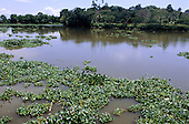 Sierpe River, Costa Rica. Invasive water hyacinth on the river.