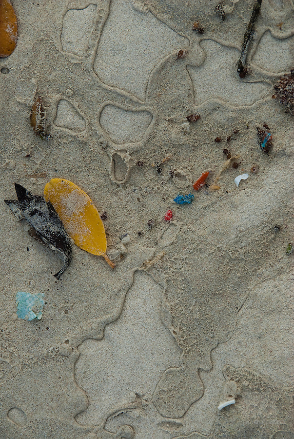Plastic can be found on all beaches of the inhabited islands of the Galapagos. Plastic is dangerous for all the animals.