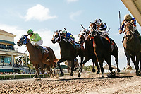 HALLANDALE BEACH, FL - JULY 01:  #5 Who's The Lady ridden by Luis Saez gets up on the rail late in the stretch to win the Azalea Stakes at Gulfstream Park. Hallandale Beach, FL. (Photo by Arron Haggart/Eclipse Sportswire/Getty Images)