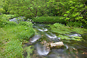 The River Lathkill, Lathkill Dale NNR, an SSSI site, Peak District National Park, UK. June. Sequence 1 of 2