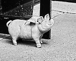Big pig doorstop outside a boutique on South Congress in Austin TX.