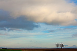 Europa, DEU, Deutschland, Niedersachsen, Leinebergland, Hemmendorf, Baeume, Landschaft, Tilly-Linde, Himmel, Wolken, Kategorien und Themen, Natur, Umwelt, Landschaft, Jahreszeiten, Stimmungen, Landschaftsfotografie, Landschaften, Landschaftsphoto, Landschaftsphotographie, Wetter, Himmel, Wolken, Wolkenkunde, Wetterbeobachtung, Wetterelemente, Wetterlage, Wetterkunde, Witterung, Witterungsbedingungen, Wettererscheinungen, Meteorologie, Bauernregeln, Wettervorhersage, Wolkenfotografie, Wetterphaenomene, Wolkenklassifikation, Wolkenbilder, Wolkenfoto....[Fuer die Nutzung gelten die jeweils gueltigen Allgemeinen Liefer-und Geschaeftsbedingungen. Nutzung nur gegen Verwendungsmeldung und Nachweis. Download der AGB unter http://www.image-box.com oder werden auf Anfrage zugesendet. Freigabe ist vorher erforderlich. Jede Nutzung des Fotos ist honorarpflichtig gemaess derzeit gueltiger MFM Liste - Kontakt, Uwe Schmid-Fotografie, Duisburg, Tel. (+49).2065.677997, archiv@image-box.com, www.image-box.com]