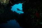 Angels Window & Diver, Lembeh Straits, Sulawesi Sea, Indonesia, Amazing Underwater Photography