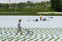 Farmers in a field in Sugadaira, Ueda, Nagano, Japan. Tuesday August 13th 2019