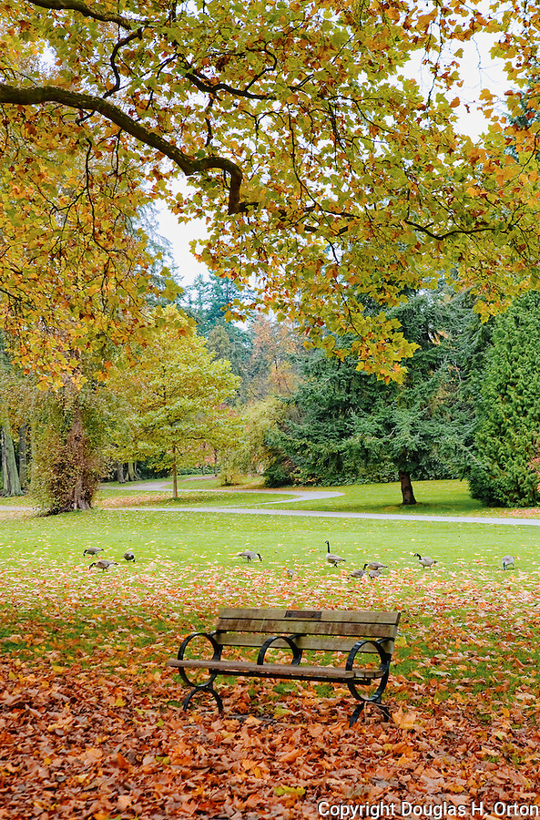 An empty park bench marks the change of seasons in Vancouver, BC, Stanley Park.  In urban Stanley Park, the promenade takes walkers, bikers, and bladers past the downtown skyline and lush natural gardens.