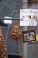 """Europe/France/Languedoc-Roussillon/66/Pyrénées-Orientales/Perpignan: le marché - escargots petits gris pour la """"Cargolade"""""""