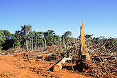 Brazil. Newly cleared rainforest with raw earth and felled trees lying on the ground. Atlantic Rainforest (Mata Atlantica)