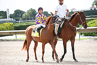 Awesome Belle on post parade for The Azalea Stakes (G3), Calder Race Course, Miami Gardens Florida. 07-07-2012.  Arron Haggart/Eclipse Sportswire.
