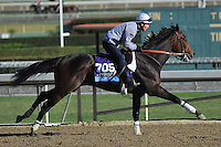 Cleburne , trained by Dale Romans, trains for the Breeders' Cup Juvenile at Santa Anita Park in Arcadia, California on October 30, 2013.