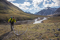 Backpacker views caribou antlers along the tundra by the itkillik river in the Brooks Range, Gates of the Arctic National Park, Alaska.
