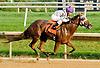Joy Rising winning. at Delaware Park on 9/6/12