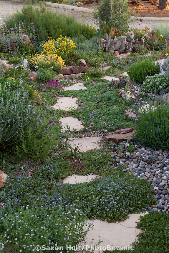 Stepping stone path with groundcovers through David Salman New Mexico garden