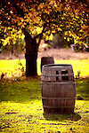 Wine barrel with fall foliage