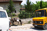 On a street in the modern lower part of the village. A donkey on the street between two lorries trucks. Berat lower town. Albania, Balkan, Europe.