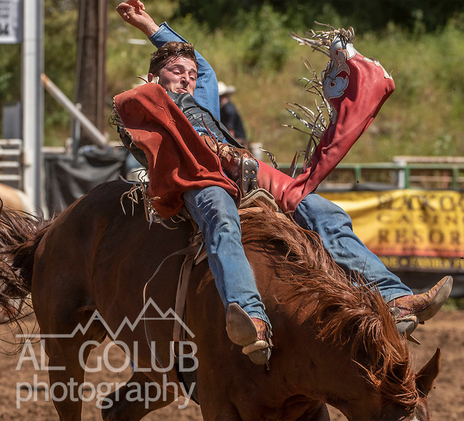 Bareback rider at the 62nd annual Mother Lode Round-up on Sunday, May 12, 2019 in Sonora, California.  Photo by Al Golub