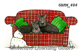 Kate, CUTE ANIMALS, LUSTIGE TIERE, ANIMALITOS DIVERTIDOS, paintings+++++Scotties on sofa.,GBKM484,#ac#, EVERYDAY