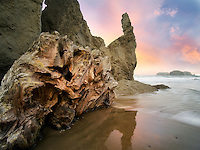 Root ball driftwood at Bandon Beach, Oregon