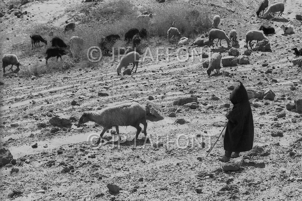 Mascara Area, Algeria, Summer 1961. Typical French Fort for a small harka unit. The main business in this area are the sheep. They sell the dong as fertilizer to orange farmer.