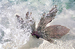 Caribbean Marine Life