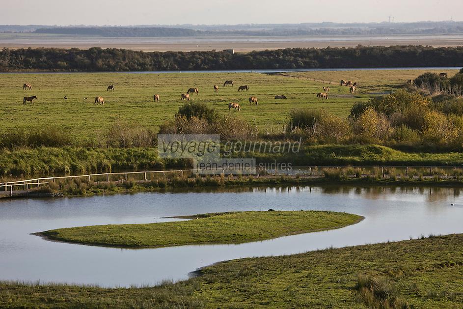 Europe/France/Picardie/80/Somme/Baie de Somme/Saint-Quentin-en-Tourmont : Parc du Marquenterre et chevaux de race henson