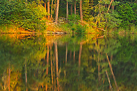Last light on trees of the boreal forest<br />