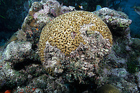 Coral bleaching, Florida Keys