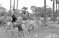 Oxcart with water containers collection water near Bagan, Myanmar, 1996