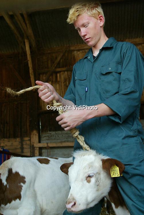Foto VidiPhoto..KAPEL AVEZAATH - Levende dieren vastbinden levert in de praktijk van alle dag bij veel boeren problemen op. De meeste knopen zijn niet meer los te krijgen, waardoor het touw doorgesneden moet worden. Op het bedrijf van boer Vermeulen uit Kapel Avezaath krijgen leerlingen van het agrarisch Heliconcollege uit Tiel les hoe ze vee moeten vastbinden. Helicon is een van de weinige agarscihe scholen waar met levende dieren wordt geoefend.