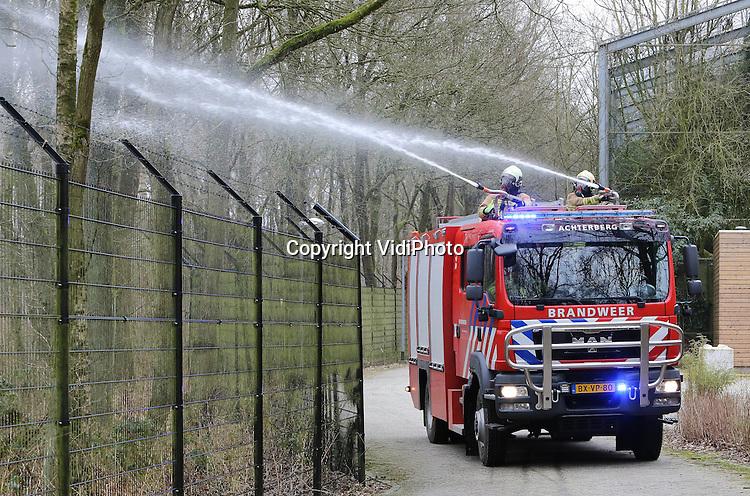 Foto: VidiPhoto..RHENEN - In Rhenen is zaterdag een voor Nederland unieke brandweeroefening gehouden door vier brandweerkorpsen met evenzoveel blusvoertuigen. Voor het eerst stond tijdens een bosbrandoefening een dierenpark in het middelpunt. Hoewel Ouwehands Dierenpark alleen op 'papier' het park ontruimde en de dieren naar hun verblijven bracht, moesten de blusvoertuigen in het bos rond het park wel in actie komen. Tijdens de ochtend- en middagoefening deden zo'n 60 brandweermannen en 20 waarnemers mee. Als een bosbrand overslaat op de dierentuin moeten alle wilde dieren afgeschoten worden, zodat ze niet kunnen ontsnappen..