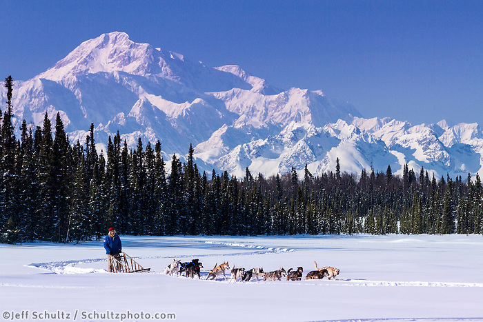 Dog musher Martin Buser runs his team during a spring training run on a lake with Mt. Mckinley and Alaska Range in the background.   Southcentral, Alaska<br /> <br /> MR2013-03-23BuserMartin